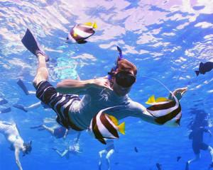 Kealakekua Bay Snorkeling