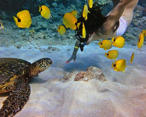 pawai bay snorkeling
